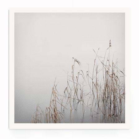 """""""Grey ajnuary"""" Art Print. Beschreibung: Minimalistische Fotografie in schwarz-weiß, Naturmotiv, floral."""