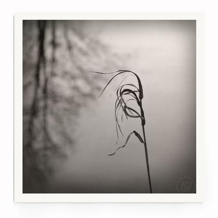 """""""InThe Wind"""" Art Print. Naturbild Gras in schwarz und weiß."""