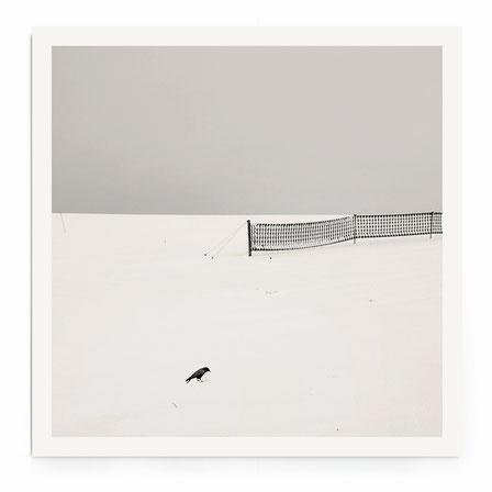 """""""Bird"""" Art Print. Minimalistische Schneelandschaft mit Vogel in schwarz-weiß, getönt."""