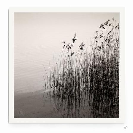 """""""Reed At The Lake"""" Art Print. Beschreibung: Minimalistische Fotografie in schwarz-weiß, Naturmotiv, Schilf und Wasser."""