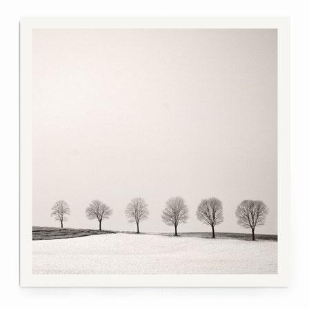 """""""Tree Line"""" Art Print. Minimalistische Winterlandschaft mit einer Baumreihe in schwarz-weiß mit warmen Ton."""