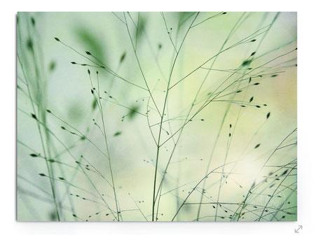 """""""Passing Meadow"""", Abstraktes Grassbild mit pastelligen Grün- und Gelbtönen."""