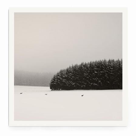 """""""Winter Scape"""" - Minimalistische Landschaft mit Felder, Wald und Vogelin schwarz-weiß."""