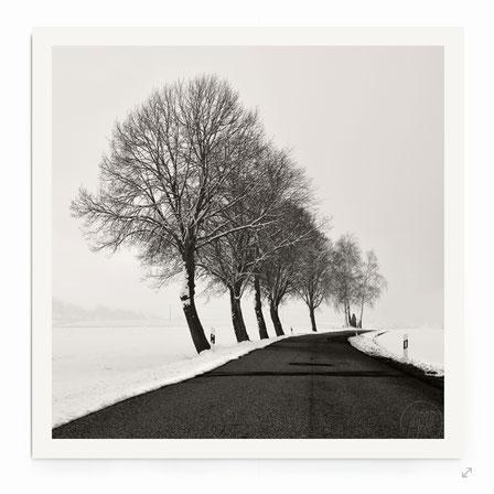 """""""Winter Avenue"""" - Minimalistische Landschaft mit Straße und Bäumen."""