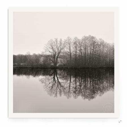 """""""Lake Shore"""" Art Print. Minimalistische Landschaft mit Waldstück am See, in schwarz-weiß."""