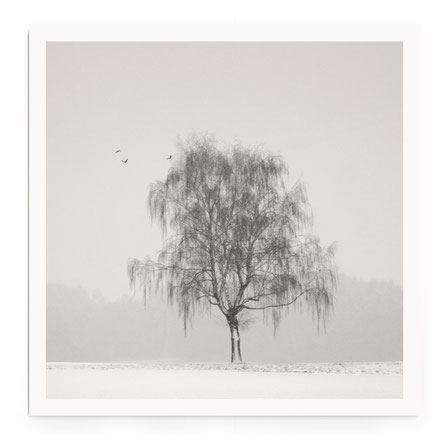 """""""Sleeping In The Cold"""" Art Print. Minimalistische Winterlandschaft mit Baum in schwarz-weiß mit warmen Ton."""