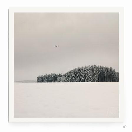 """""""Königsee"""" - Stimmungsvolle Winter-Landschaft mit Wald in schwarz-weiß."""