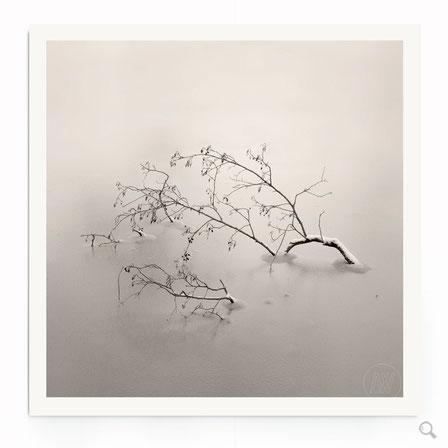 """""""Bedded In Ice"""" Art Print. Beschreibung: Minimalistische Fotografie in schwarz-weiß, Naturmotiv, floral."""