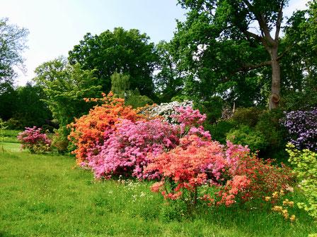 Sehenswürdigkeit englische Gärten Azaleen