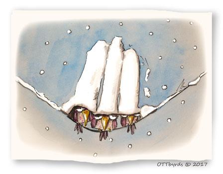 Schneefall,wintervögel,schneehauben,ottbyrds, schräge vögel,winterwonderland
