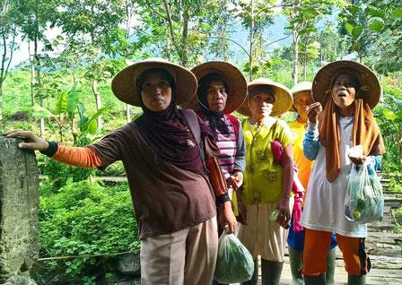 Koffie pluksters in Kalibaru op oost Java