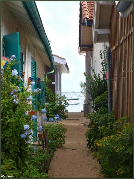 Ruelle fleurie menant à la plage et au Bassin, Village de L'Herbe, Bassin d'Arcachon (33)