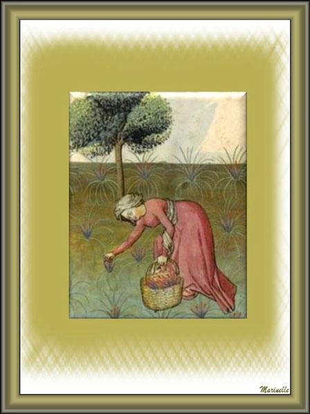 Récole de la lavade au Moyen Age vers 1445-1451