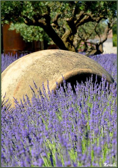 """Le """"Musée de la Lavande"""" à Coustellet (84) : énorme jarre dans le jardin aux lavandes en fleurs"""