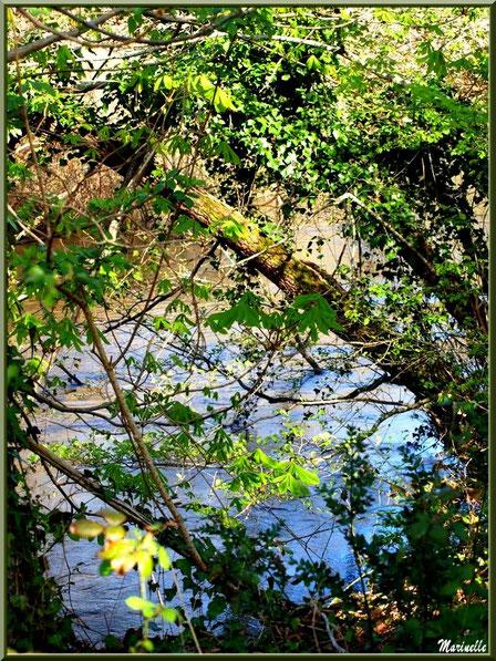 Marronniers aux feuilles printanières et reflets sur La Leyre, Sentier du Littoral au lieu-dit Lamothe, Le Teich, Bassin d'Arcachon (33)