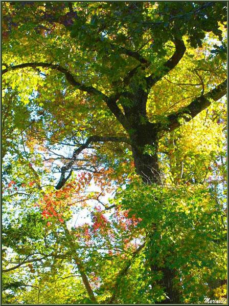 Chênes en début d'automne, forêt sur le Bassin d'Arcachon (33)
