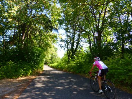 Rennrad Urlaub in der Hügellandschaft der Toskana