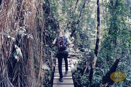 Durch den Dschungel im Bako Nationalpark