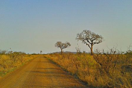 Straße im Kruger Nationalpark