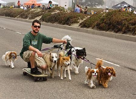 Dog Pulling Skateboard California... pinche en la foto.