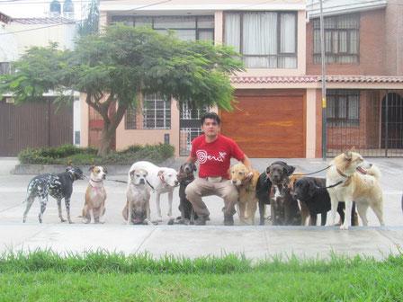 DOG WALKER PERÚ, presione en la imagen.