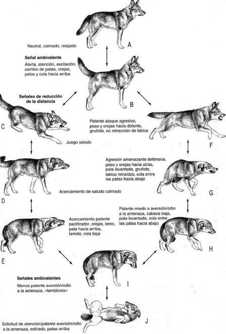 DOMINANCIA CANINA... pinchando el diagrama.