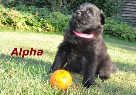 Alpha mit ca. 5 Wochen