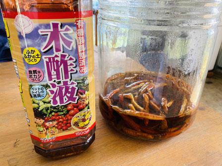 防虫対策として木酢液と唐辛子の焼酎付け