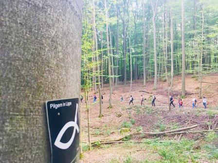 Pilgern durch den Teutoburger Wald © Naturpark Teutoburger Wald/Eggegebirge