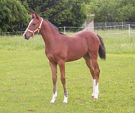 Topaction des Fusains as a yearling