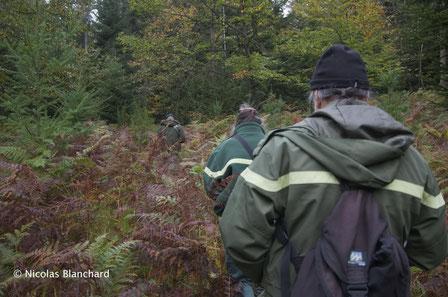Formation des correspondants du pôle archéologique dans une forêt Normande.