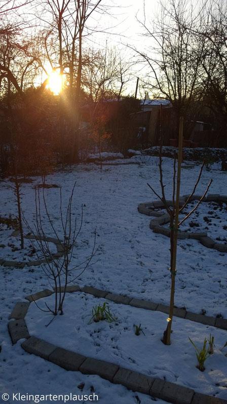 Verschneiter Garten mit eingefasstem Beet im Vordergrund: Birnbäumchen und Aroniastrauch