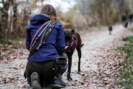 Annäherung an ängstlichen Hund