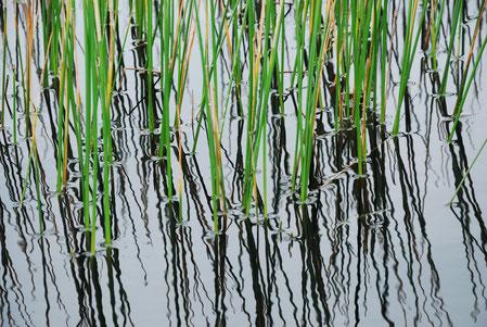 Gräser im Wasser weisen auf Hypnose & Naturheilkunde hin