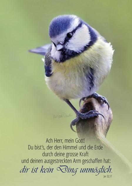 Blaumeise, Vogel, Tier