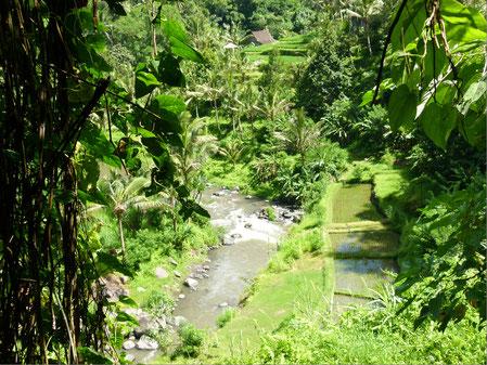 Waldlandschaft mit Fluß in Bali