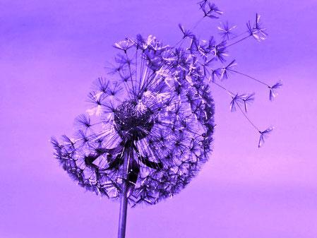 bien-être, joie de vivre, équilibre, harmonie, confiance et estime de soi
