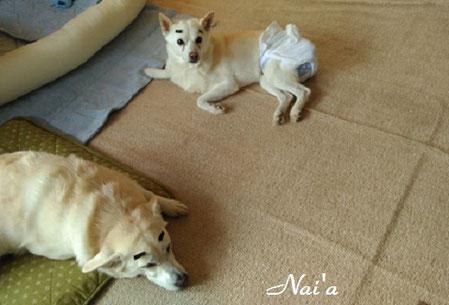岩手県 秋田県 青森県 保護犬 アニマルヒーリング アニマルコミュニケーション
