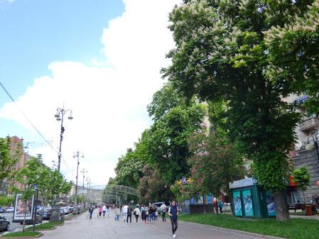 Khreshchatyk street with chestnut trees