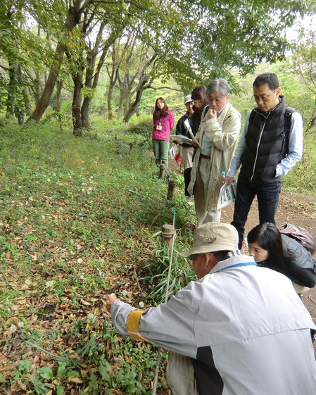 11月9日(2014) 自然観察(野川公園・自然観察園) 11月8日実施の自転車散歩(ガイドツアー)にて