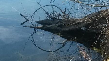 Waldbaden: stilles Wasser für Ruhe und Gelassenheit