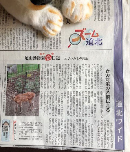 2019.6.17北海道新聞朝刊道北版の写真