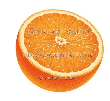 オレンジイラスト