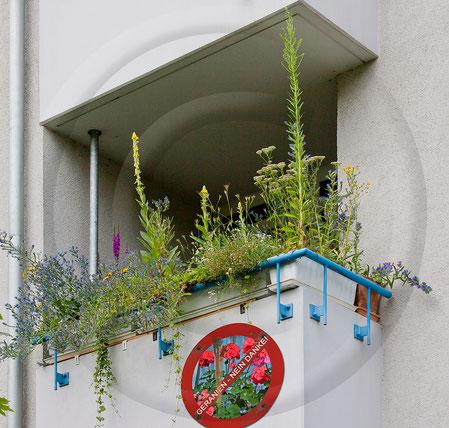 Naturgartenbalkon Balkon Balkonkasten