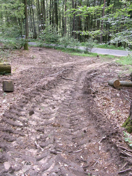Verdichtete Waldböden, auf denen nachweislich lange Zeit kein Baum wachsen kann