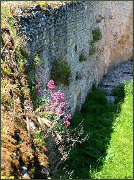 Anciennes fortifications de la Promenade des Remparts à Talmont-sur-Gironde, Charente-Maritime