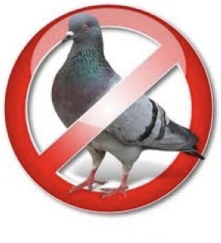 Risolvere il problema dei piccioni non è mai stato così semplice!