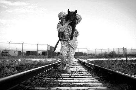 Chiens de guerre: Syndrome de stress post-traumatique chez les chiens ?