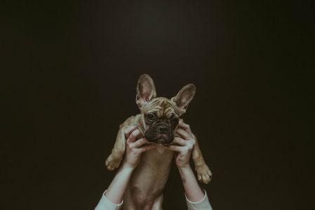 Facteurs de risque d'agression chez le chien