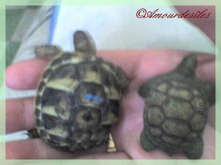 Tiki et un bibelot en agathe tortue...